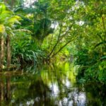 Post-Synodal Apostolic Exhortation - Querida Amazonia